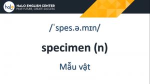 Từ Vựng TOEIC Specimen